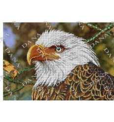 Погляд орла DANA-3303 · Схема вишивки на полотні (атлас ... 545bfeb339c28