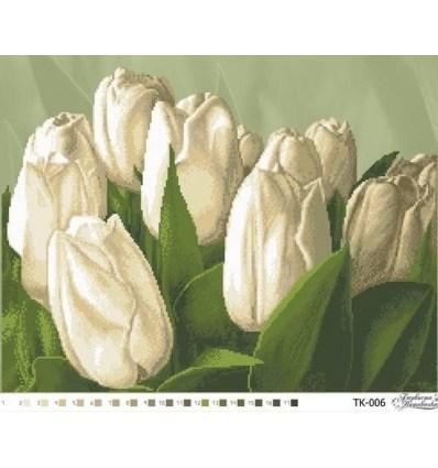 Тюльпаны TК-006