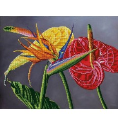 Орхидея DANA-3345