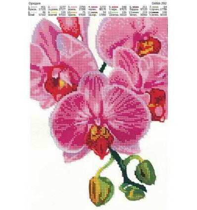 Орхидея DANA-292