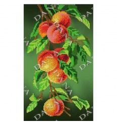 Апельсины DANA-2358