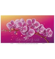 Орхидея DANA-511