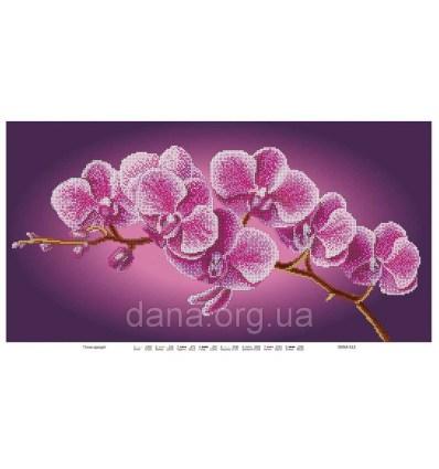 Орхидея DANA-510