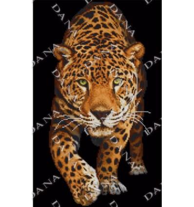 Взгляд леопарда DANA-3173