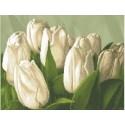 Тюльпани
