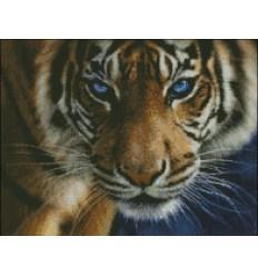 Взгляд тигра МЦ3-014