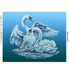 Пара лебедів ЧВ-7007