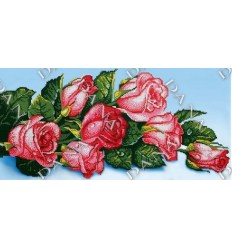 Розовые розы DANA-537