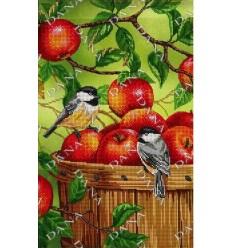 На яблуках DANA-3279