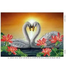 Любов в верности DANA-363