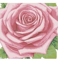 Роза DANA-59